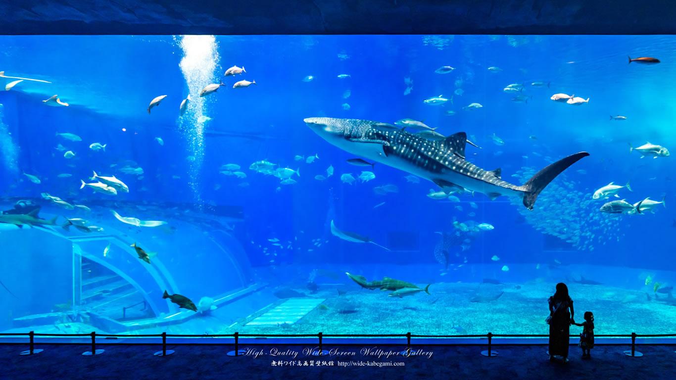 自然風景のワイド壁紙 1366x768 沖縄 美ら海水族館 1 無料ワイド高画質壁紙館