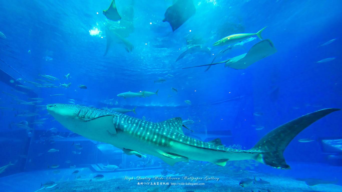 自然風景のワイド壁紙 1366x768 沖縄 美ら海水族館 2 無料ワイド高画質壁紙館