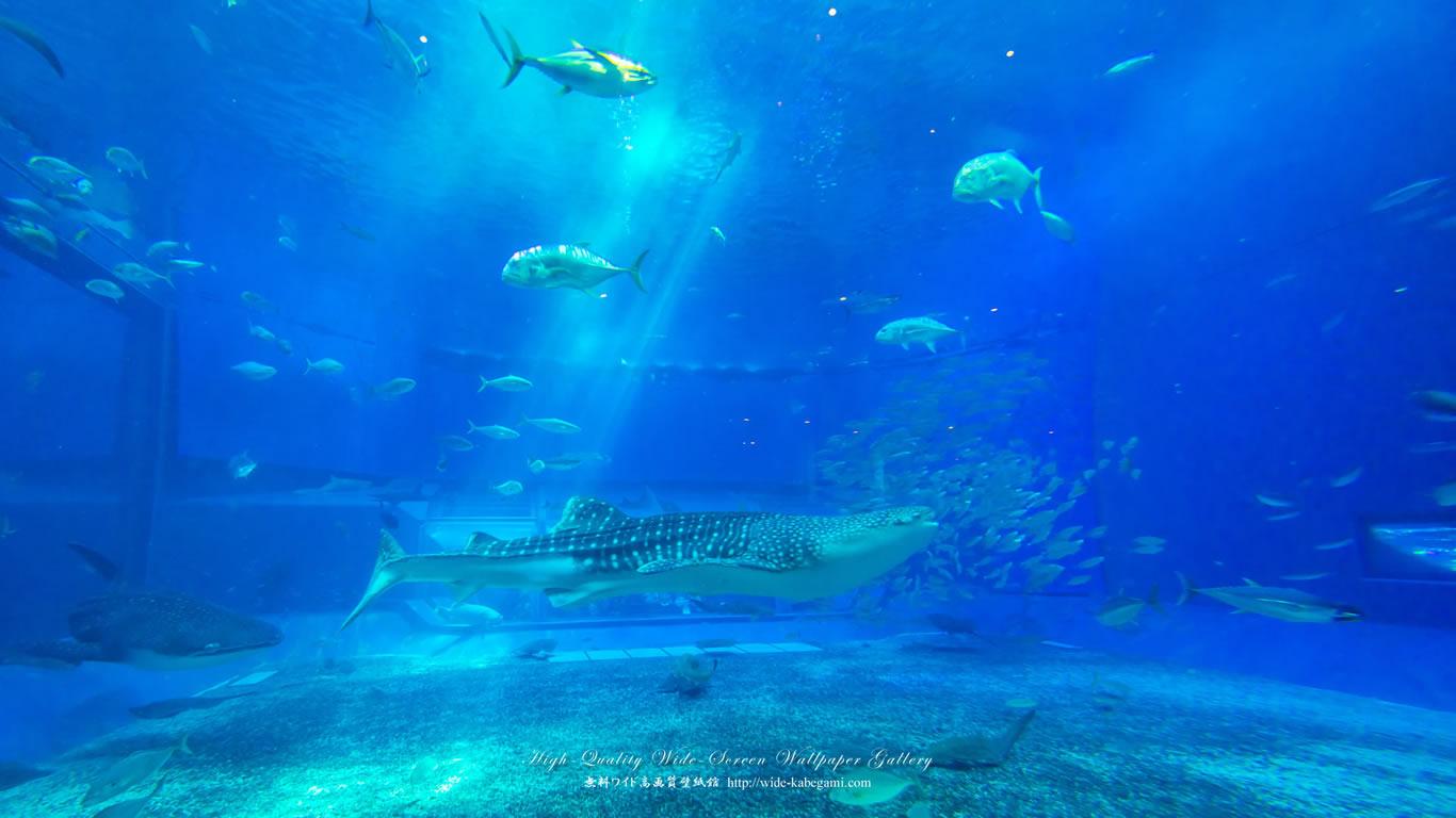 自然風景のワイド壁紙 1366x768 沖縄 美ら海水族館 3 無料ワイド高画質壁紙館