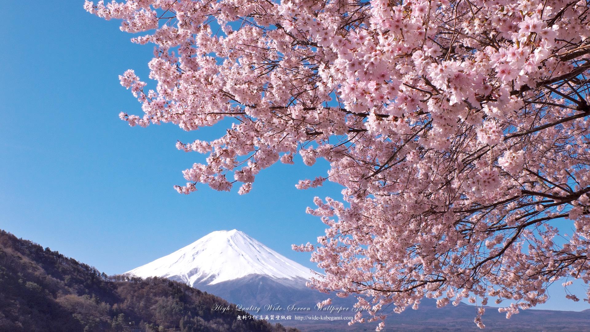 富士山のワイド壁紙 19x1080 桜と富士山 無料ワイド高画質壁紙館