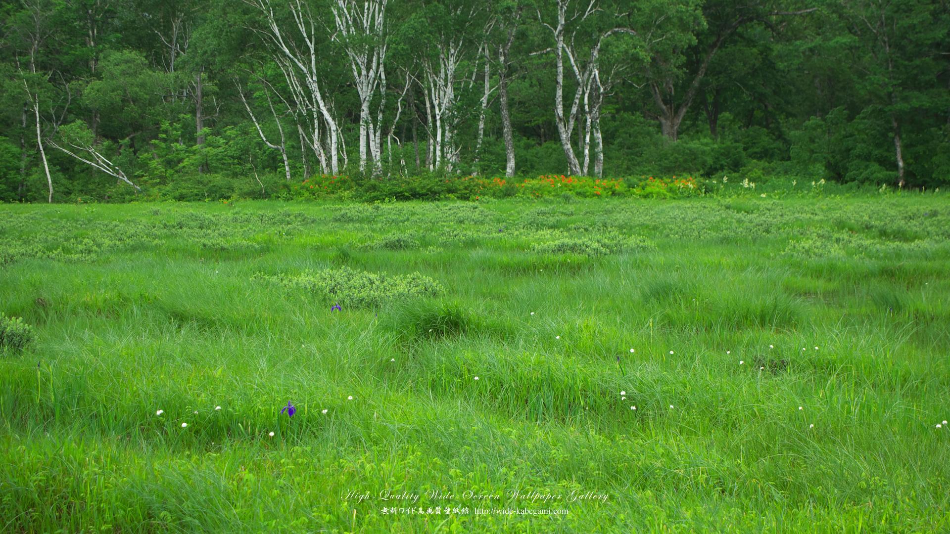 自然風景のワイド壁紙 1920x1080 花咲く湿原 無料ワイド高画質壁紙館