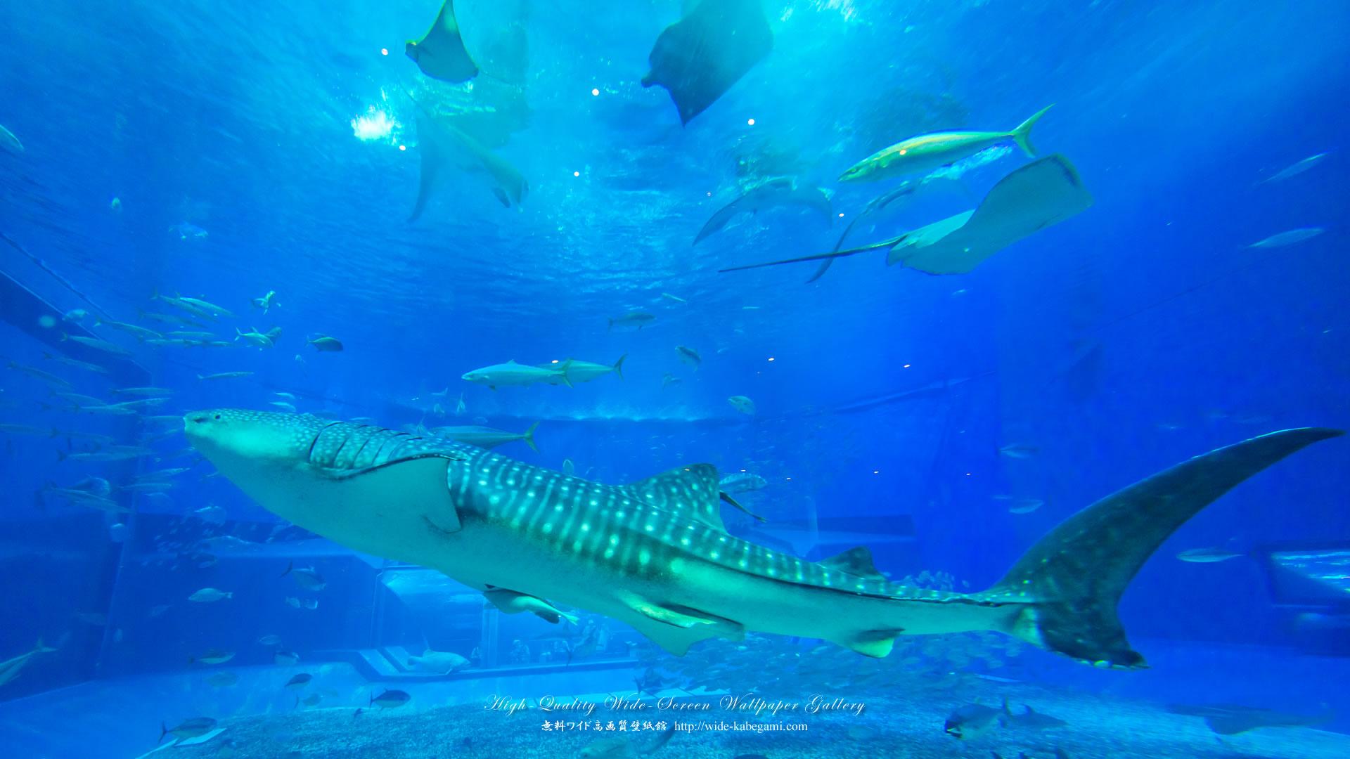 自然風景のワイド壁紙 19x1080 沖縄 美ら海水族館 2 無料ワイド高画質壁紙館