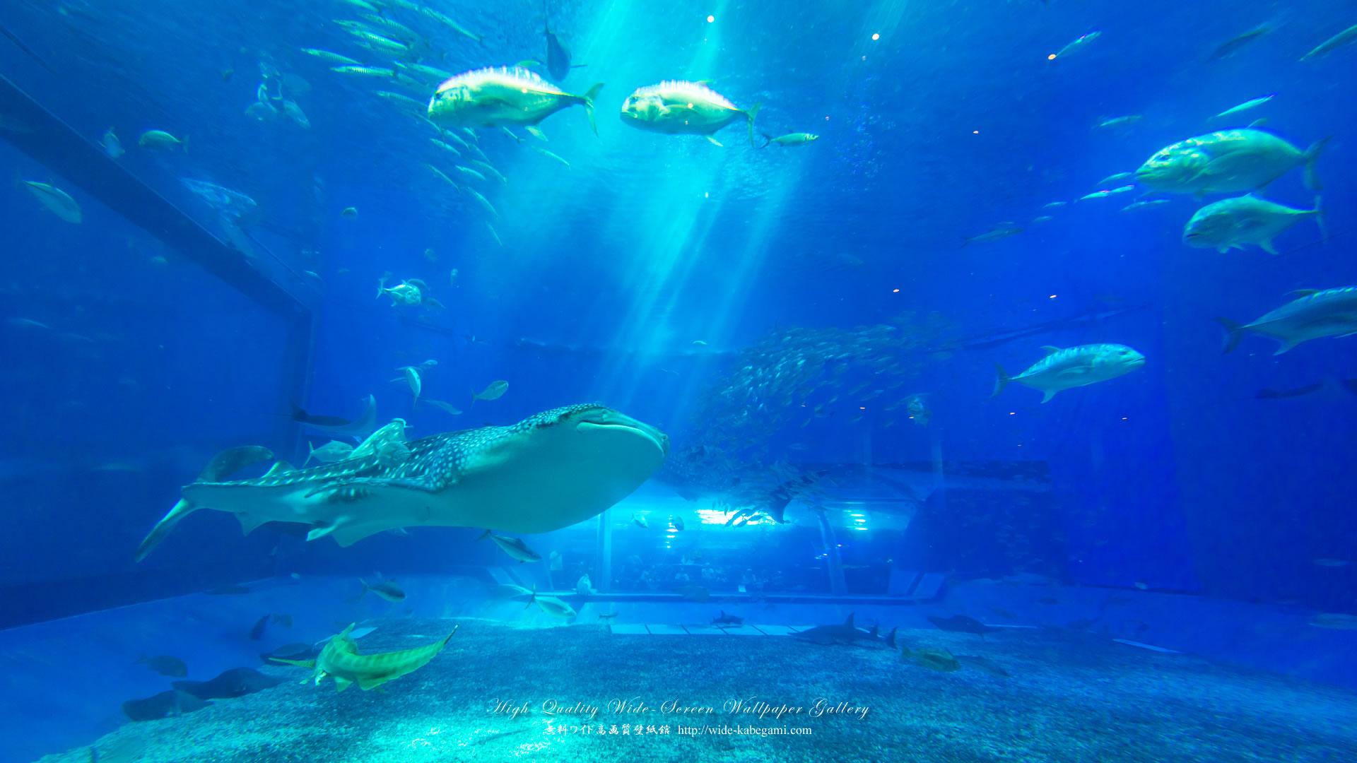 自然風景のワイド壁紙 19x1080 沖縄 美ら海水族館 4 無料ワイド高画質壁紙館