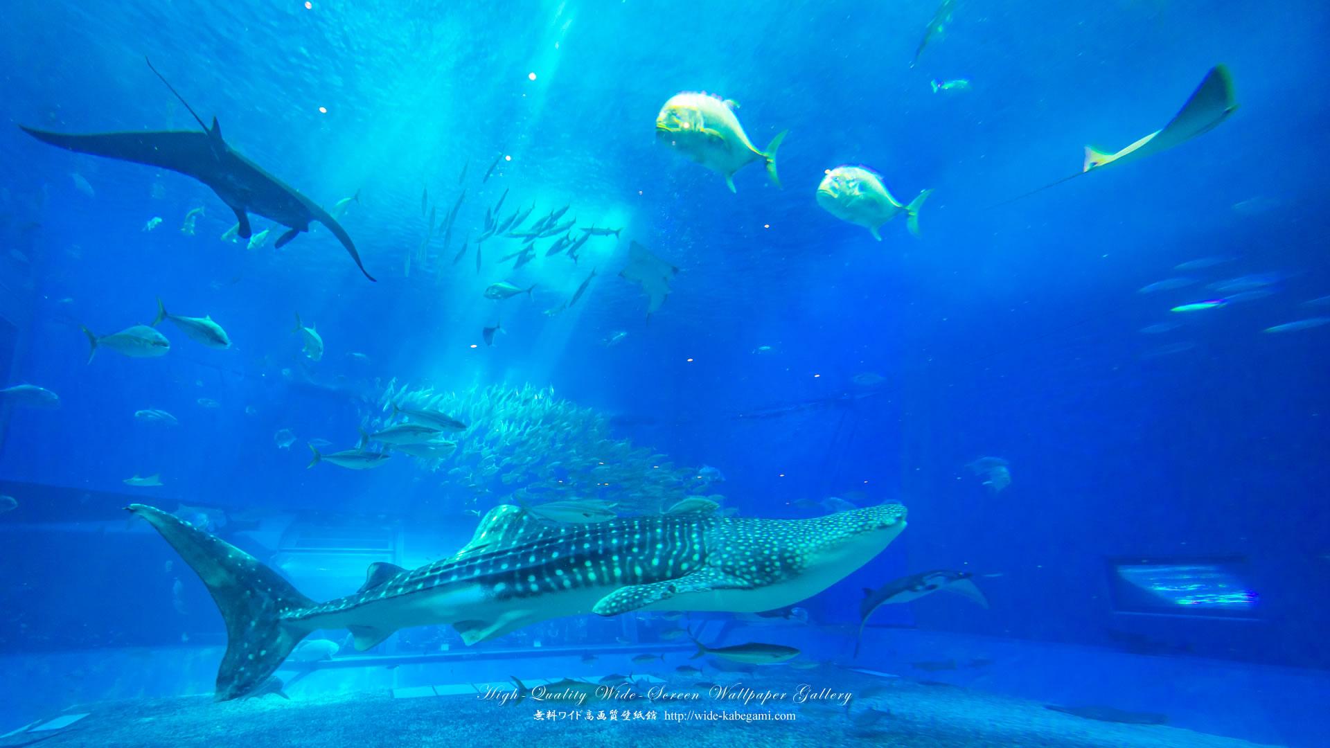 自然風景のワイド壁紙 1920x1080 沖縄 美ら海水族館 6 無料ワイド高