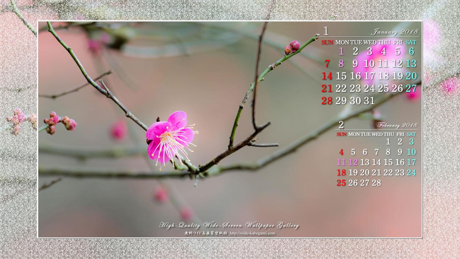 2018年1月の自然ワイド壁紙カレンダー:梅の花-1|無料ワイド高 ...