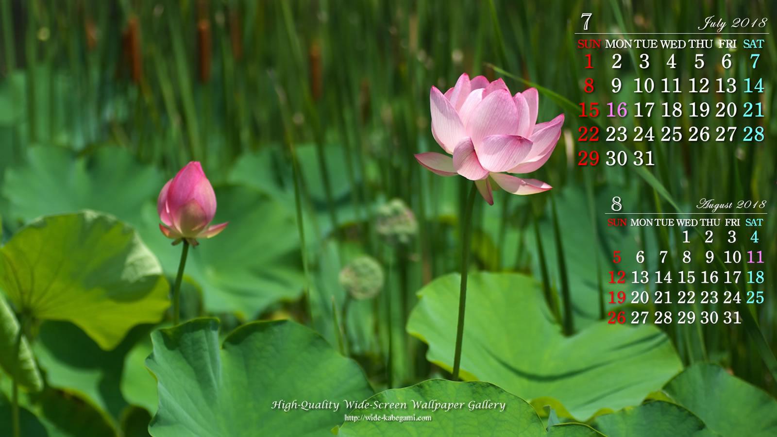 18年7月の前月表示の3ヶ月ワイド壁紙カレンダー 1600x900 蓮の花 無料ワイド高画質壁紙館