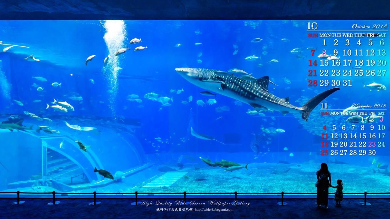 18年10月のカレンダー壁紙 1366x768 美ら海水族館 無料ワイド高画質壁紙館