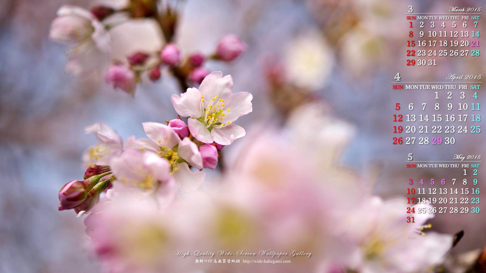 桜 無料 壁紙