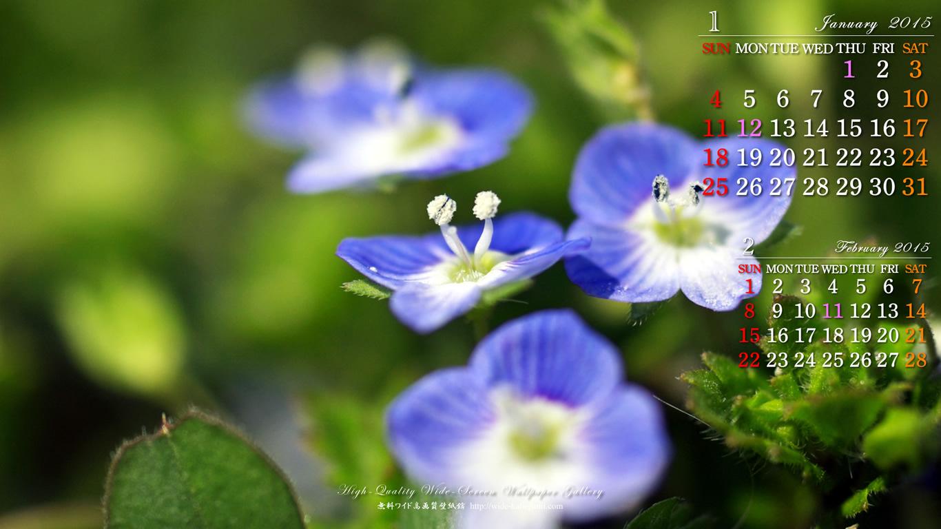 オオイヌノフグリの画像 p1_22